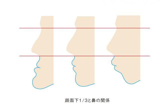 顔面下と鼻の関係